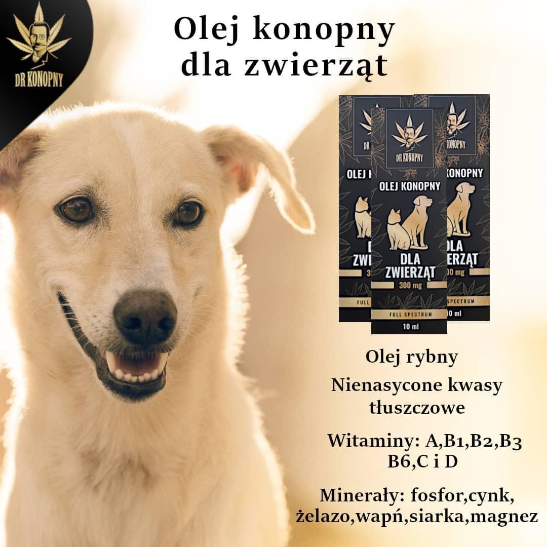 Olej konopny dla zwierząt od Dr Konopny
